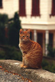 Red tabby cat sits on curb. Portrait of cute red cat sitting on road Royalty Free Stock Image