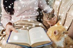 Red and tabby and owner reading book at home royalty free stock photos