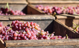 Red Table Grapes. Old wooden crates filled with red table grapes at a farmer's market stock photos
