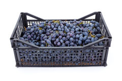 Red table grapes (Vitis) in plastic crate Royalty Free Stock Photos