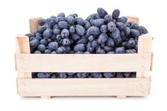 Red table grapes (Vitis) in wooden crate Royalty Free Stock Image