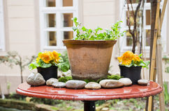 Red table with spring flowers in the garden Stock Images