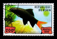 Red-tailed Black Shark (Epalzearhynchos bicolor), Fishes serie,. MOSCOW, RUSSIA - NOVEMBER 26, 2017: A stamp printed in Benin shows Red-tailed Black Stock Images