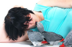 Red tale parrot on white kissing with female Stock Photos