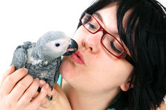 Red tale parrot on white kissing with female Stock Photo