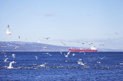 Red tanker with shore birds Royalty Free Stock Photography