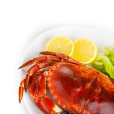 Red tasty boiled crab Stock Image