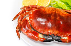 Red tasty boiled crab Stock Photography