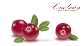 Red tasty cranberry set with leaf on isolated white background. Cranberries for juice, pudding, smoothie, sauces ads. 3d realistic icon package design Stock Images