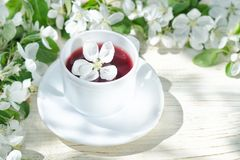 Red tea with apple blossom. White background, natural light.  Royalty Free Stock Photos