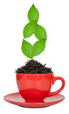 Red tea cup Stock Photography