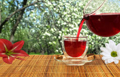Red tea in the lush garden Royalty Free Stock Photography