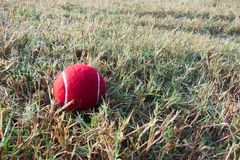 Red tennis ball on dew drops wet green grass track play ground Royalty Free Stock Photo