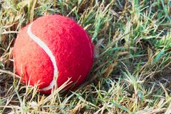 Red tennis ball on dew drops wet green grass track play ground Stock Photography