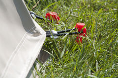 Red tent peg Stock Image