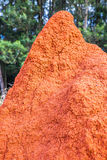 Red termite hill Royalty Free Stock Images
