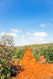 Red termite hill. Somewhere in South Africa Stock Photography