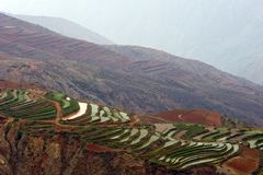 The red terrace of Yunnan, China Stock Images