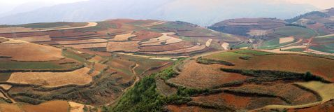 The red terrace of Yunnan, China Royalty Free Stock Images