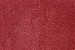 Red texture leather shagreen. Close up red texture leather shagreen Royalty Free Stock Photo