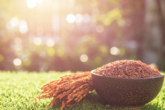 Red Thai jasmine rice in dark bowl on green grass with sunlight Stock Photos