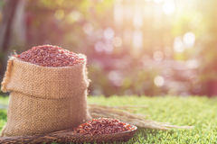 Red Thai jasmine rice in small sack on green grass with sunlight Stock Image
