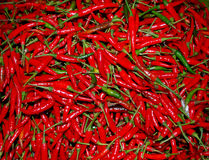Red Thai paprika Stock Images