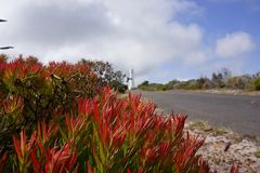 Red thick leaves next to a lighthouse. Red thick leaves next to the street Stock Images