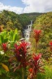 Red ti plant and Umauma falls. Red ti plant Umauma falls in Hawaii Stock Image