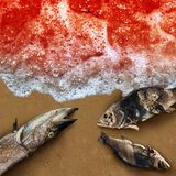 Red Tide Concept stock image