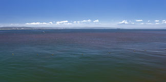 Red tide in sea water Royalty Free Stock Photography