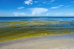 Red Tide. Visible Red tide in the Gulf of Mexico is a common phenomenon known as an algal bloom large concentrations of aquatic microorganisms that is caused by Royalty Free Stock Image
