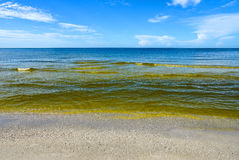 Red Tide. Visible Red tide in the Gulf of Mexico is a common phenomenon known as an algal bloom large concentrations of aquatic microorganisms that is caused by Royalty Free Stock Images