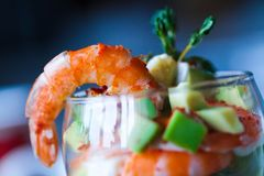 Red tiger shrimp Stock Image