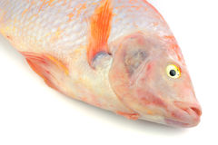 Red Tilapia Royalty Free Stock Images