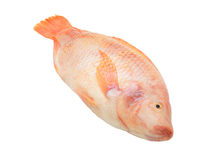 Red tilapia isolated Stock Images