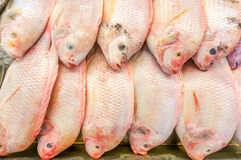Red Tilapia Royalty Free Stock Photo