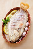 Red tilapia Stock Photography