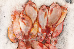 Red tilapia snapper fish on ice for sale in market Royalty Free Stock Photos