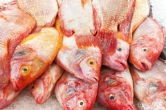 Red tilapia snapper fish on ice for sale in market Royalty Free Stock Image