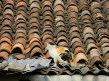 Red tile roof with cat in the foreground royalty free stock images