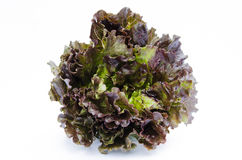 Red Tip Lettuce Head Royalty Free Stock Photos