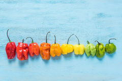 From red to green, peppers colors Royalty Free Stock Photos