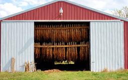 Red Tobacco Barn. A stocked red and white tobacco barn located in south-central Kentucky Stock Image