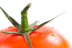 Red Tomato. On white background Royalty Free Stock Image