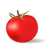 Red tomato. With water drops Royalty Free Stock Image