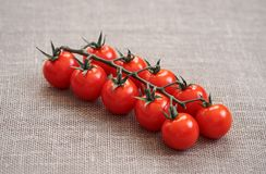 Cherry tomato on a green branch is on the burlap. Side view royalty free stock photography