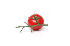 Red tomato with branch Royalty Free Stock Photo