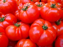 Red Tomato Bundle Royalty Free Stock Photography