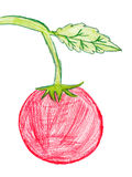 Red tomato. children pencil drawing Stock Photography